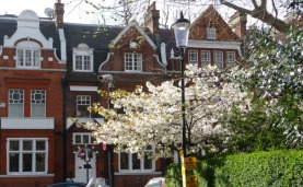Dutch houses and blossom - Earl's Court Square